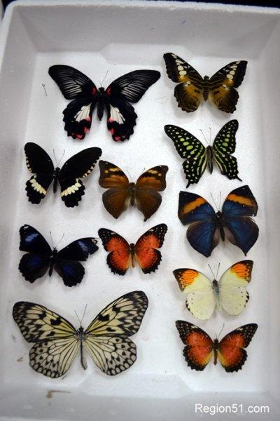 Тропические бабочки
