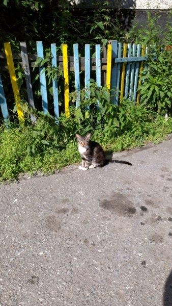 Шабалинский кот