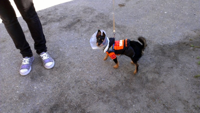 собака-космонавт
