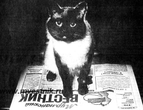 Кот Семён, реальная фотография